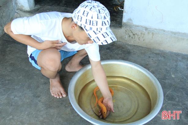 Nông dân Hà Tĩnh bắt được lươn vàng, thương lái hỏi mua 10 triệu