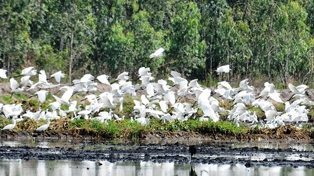Unique Lang Sen Wetland Reserve
