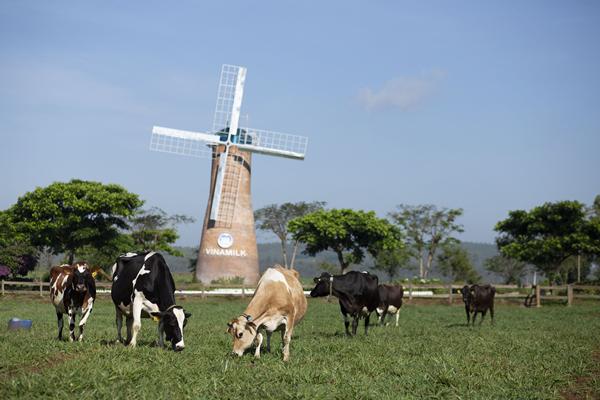 Vinamilk thuyết trình về xu hướng Ogranic tại hội nghị sữa toàn cầu