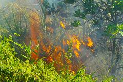 Cháy rừng 8 tiếng ở Đà Nẵng, hàng trăm cứu hỏa chưa dập xong