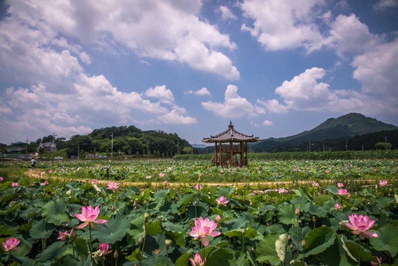 du lịch hàn quốc,Tổng cục Du lịch Hàn Quốc,KTO,lễ hội hàn quốc