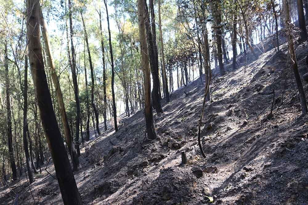 cháy rừng,cắt điện,nắng nóng