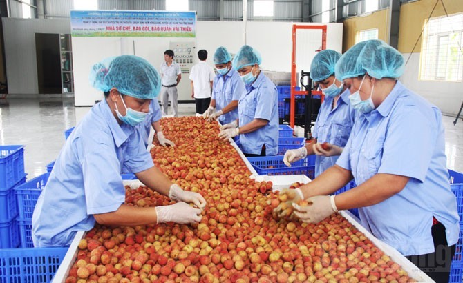 8,6 triệu hộ nông dân Việt lạc lối trên thị trường tỷ dân