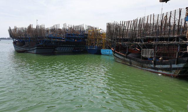Trung Quốc ngừng mua, hàng trăm tấn mực khô tồn kho, không có đầu ra