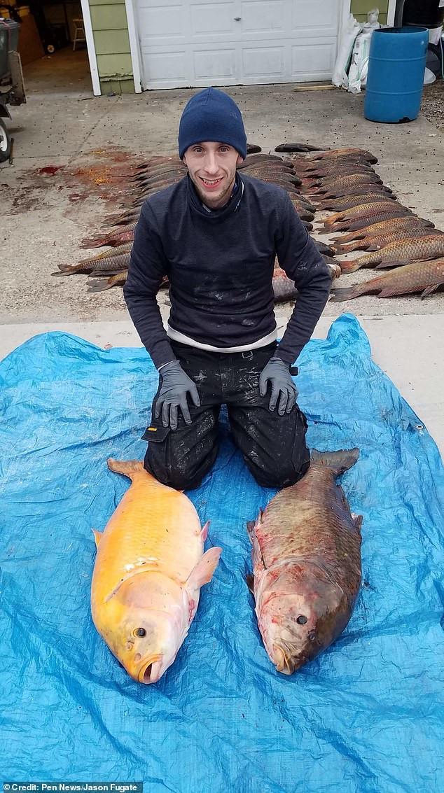 Hoảng hồn bắt được cá vảy vàng 'thành tinh' khổng lồ, siêu kỳ lạ