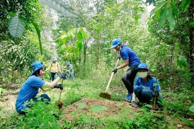 Dong Nai: Forest planting improves habitats of elephants