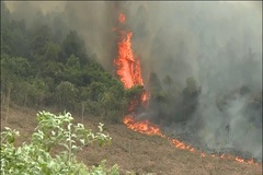 Cháy rừng diện rộng ở Quảng Bình, 50ha rừng thông thành tro