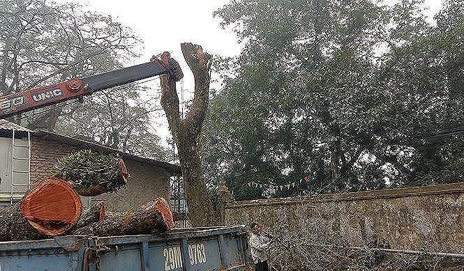 Khách hàng muốn đấu giá lô gỗ sưa ở Hà Nội phải đặt cọc gần 10 tỷ