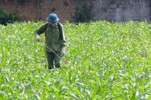 Vietnam's northern provinces urged to bring pesticide use under control