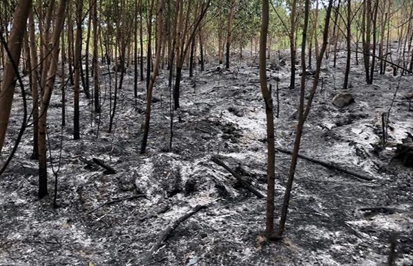 Đến lượt hàng loạt ha rừng ở Quảng Ngãi chìm trong biển lửa