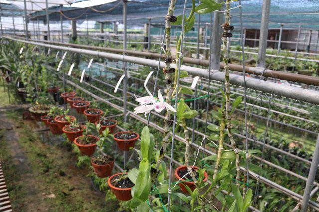 lan phi điệp,lan rừng,lan quý hiếm,hoa lan
