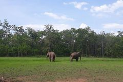 Tourism elephants released into national park