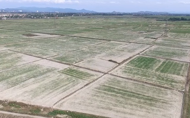 Nghe An seeks over $3 million to deal with prolonged drought