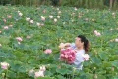Công viên nổi tiếng phải đóng cửa vì du khách hái trụi hoa sen