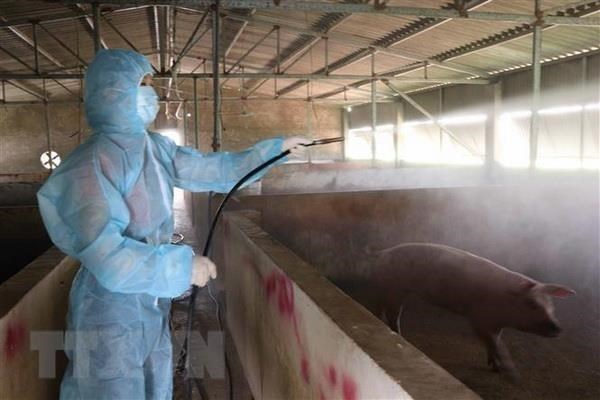 Vietnam develops anti-African swine fever vaccine