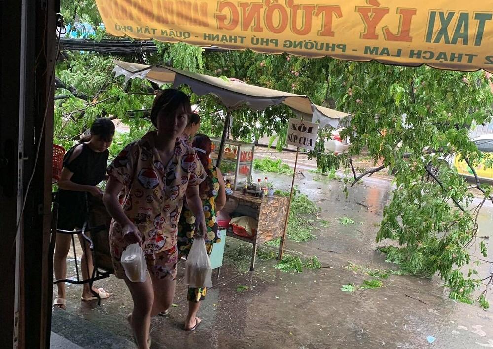 Cây xanh từ trường tiểu học đổ ra đường, đè bẹp xế hộp ở Sài Gòn