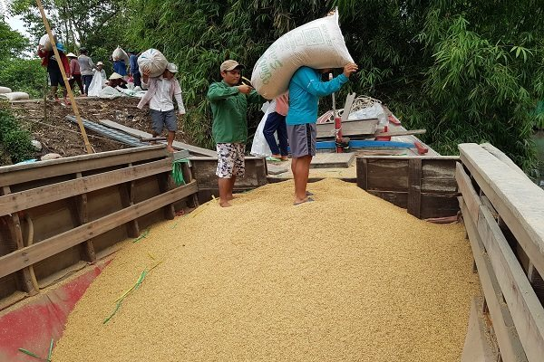 Vietnam's rice exports drop, causing big worries