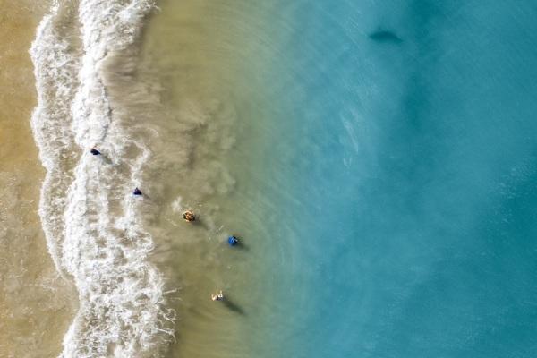 Cá mập,biển,Mỹ,Florida,tấn công,động vật