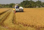 ODA for agricultural development nears $2 billion in 20 years