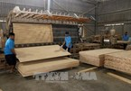 EVFTA to sustainably boost Vietnam's wood exports to EU