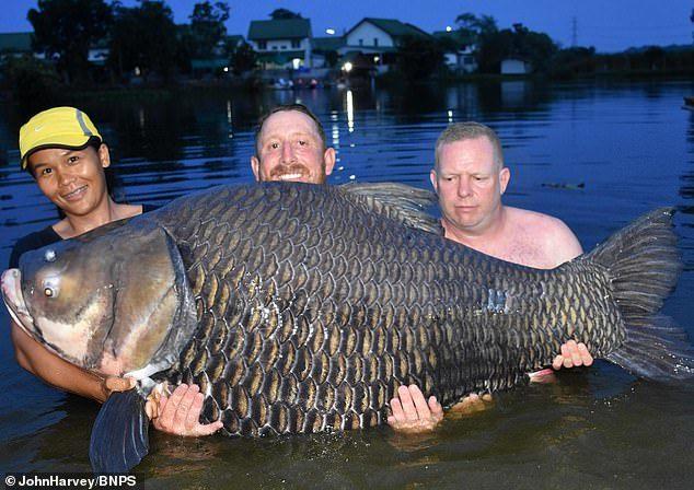 Hơn 1 tiếng đồng hồ vật lộn bắt cá chép khổng lồ nặng 1 tạ