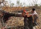 Central Highlands forests still 'bleeding'