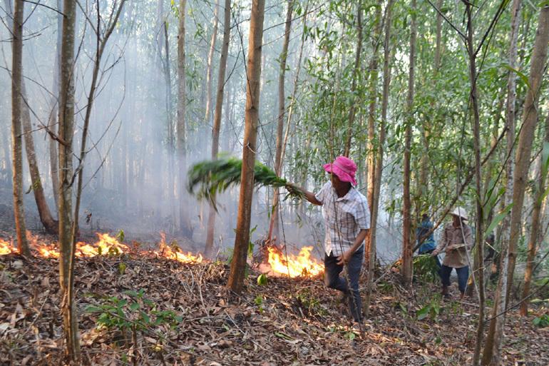 Rừng keo ở Phú Yên cháy dữ dội, hơn 500 người nỗ lực dập lửa