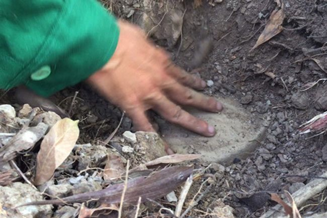Dead fetuses in Ca Mau-based waste treatment plant confirmed