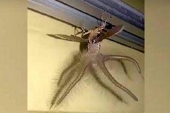 Phát hoảng vì sinh vật kỳ quái xuất hiện trong phòng ngủ