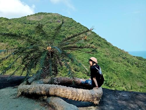 Kiên Giang: Hòn Sơn có cây thiên tuế cổ, cuộn tròn như con rồng bí ẩn