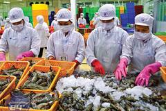 EVFTA paves way for more catfish, shrimp exports to EU