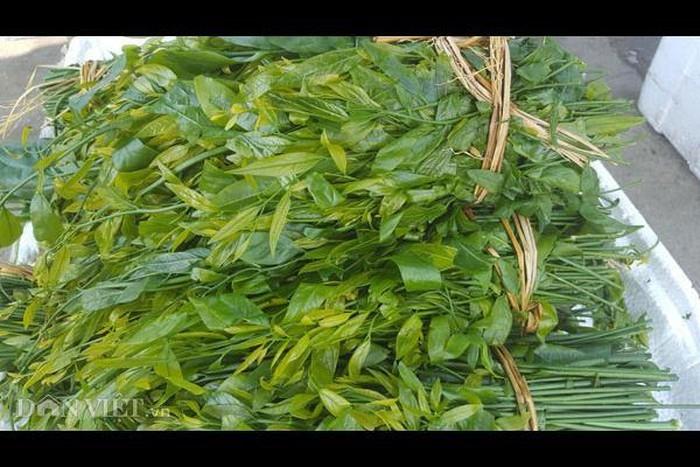 Những loại 'lộc trời' một năm chỉ có một lần ở Việt Nam