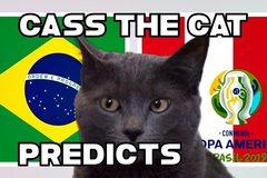 """Xem Mèo tiên tri """"phán"""" kết quả chung kết Brazil vs Peru"""