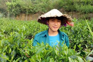 Chè trên đồi, sen dưới đầm chàng trai ướp trà bán chục triệu/kg
