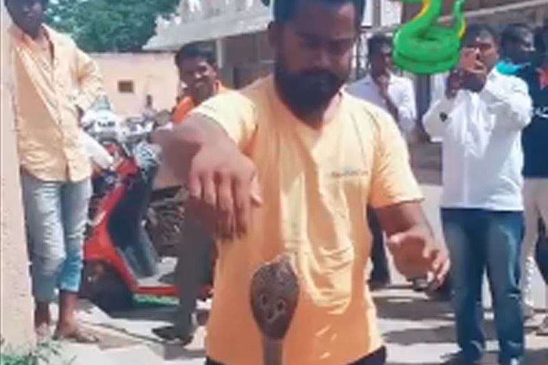 rắn hổ mang,tay không bắt rắn,Ấn Độ