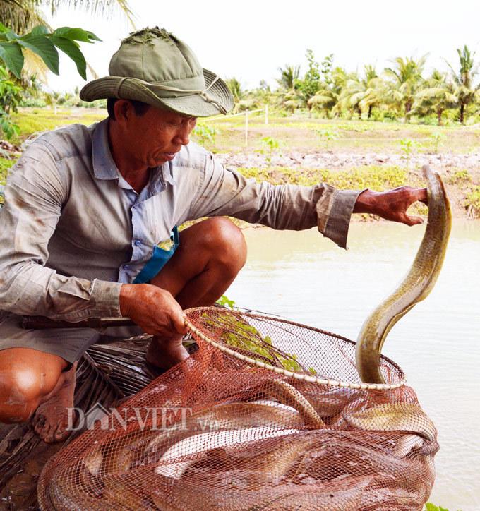 Cà Mau: Loài đặc sản cá xấu xí 'ông ăn bà mê mệt' bán giá cực cao