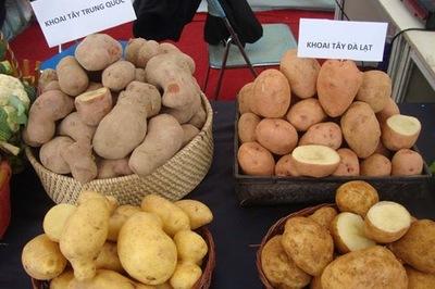Khoai tây vẫn là khoai tây, làm sao phân biệt hàng Tàu hay Việt