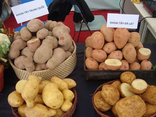 Khoai tây thì vẫn là khoai tây, làm sao phân biệt hàng Tàu hay Việt