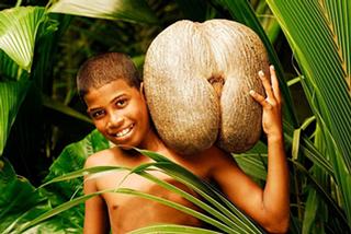 Đỏ mặt loại dừa 'độc nhất vô nhị' thế giới giống hệt vòng ba phụ nữ