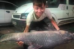 Bắt được cá trắm đen nặng 50kg, dài 1,5m ở hồ Thác Bà