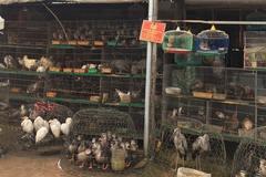 Chợ chim trời lớn nhất ở miền Tây