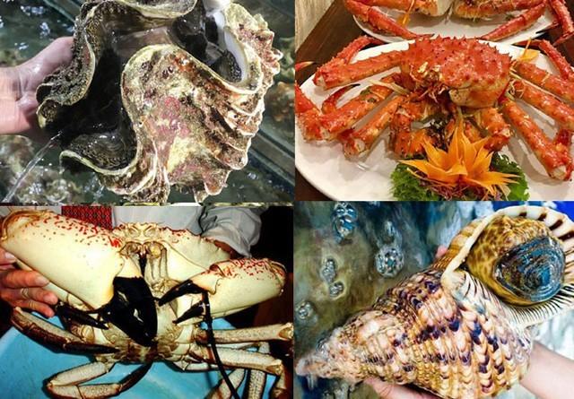 hải sản đắt đỏ,hoa quả nhập khẩu,món ăm đắt tiền