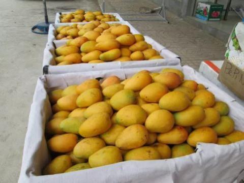 hoa quả Trung Quốc,trái cây Trung Quốc,hàng rong