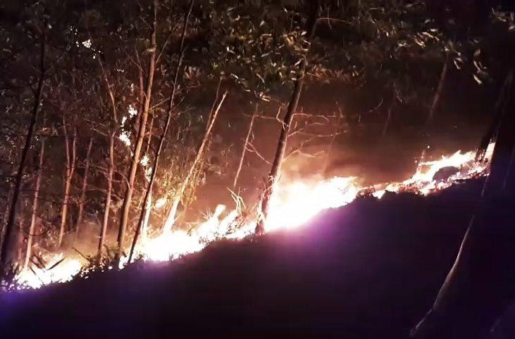 cháy rừng,hỏa hoạn,Quảng Nam