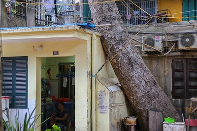 """Ảnh: Cây cổ thụ """"xuyên thủng"""" nhiều nhà dân ở Hà Nội"""