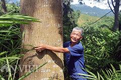 Sau 20 năm trồng, giờ chỉ việc ra vườn đếm từng cây gỗ ra cây vàng