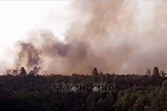 Quang Nam extinguishes three forest fires