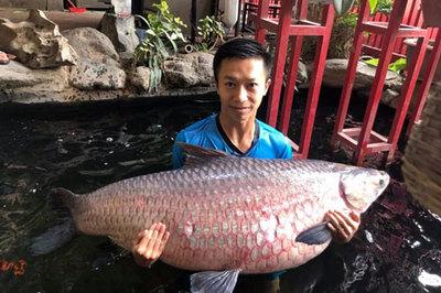 Cá trắm đen khủng, dài 1,6m vùng vẫy trong bể nước ở Hà Nội