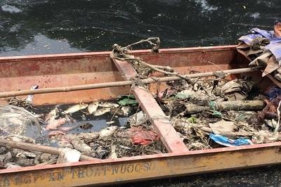 Sông Tô Lịch nước đen, xuất hiện cá chết dạt vào bờ sau khi ngừng xả nước hồ Tây