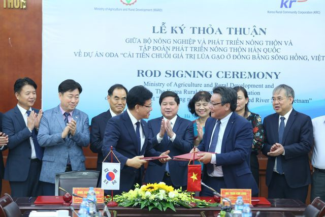 South Korea to help improve Vietnamese rice quality